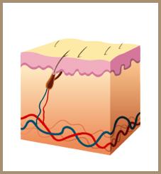 sparse hair-insufficient protein-jonsson protein singapore